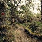 Wandern in Mölle #3