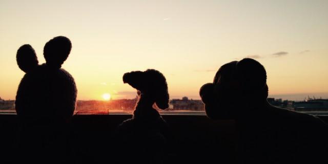 Emily, Lanzelot and Simba watching the sunset